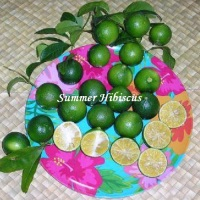 CITRUS LIME KUKURACHA FRUIT TREE