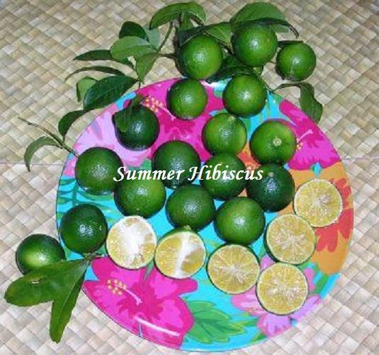 Cocoracha1