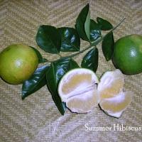 CITRUS ORANGE KAHET FRUIT TREE