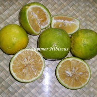 CITRUS LEMONADE LALANGA FRUIT TREE