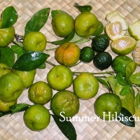 CITRUS ORANGE MANDARIN FRUIT TREE