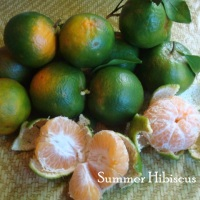 CITRUS TANGERINE FRUIT TREE