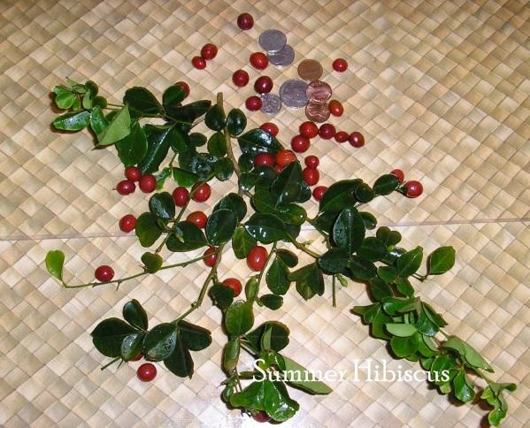 Ttrifolia1.jpg