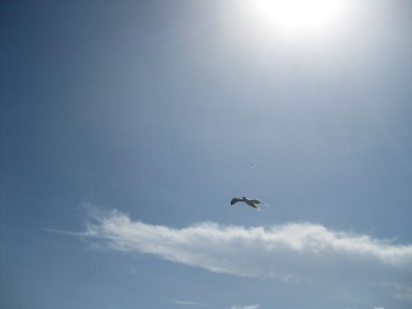 BirdSanctuary19